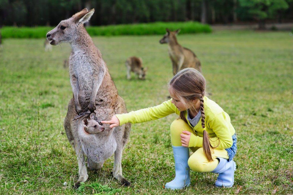 kid with kangaroos