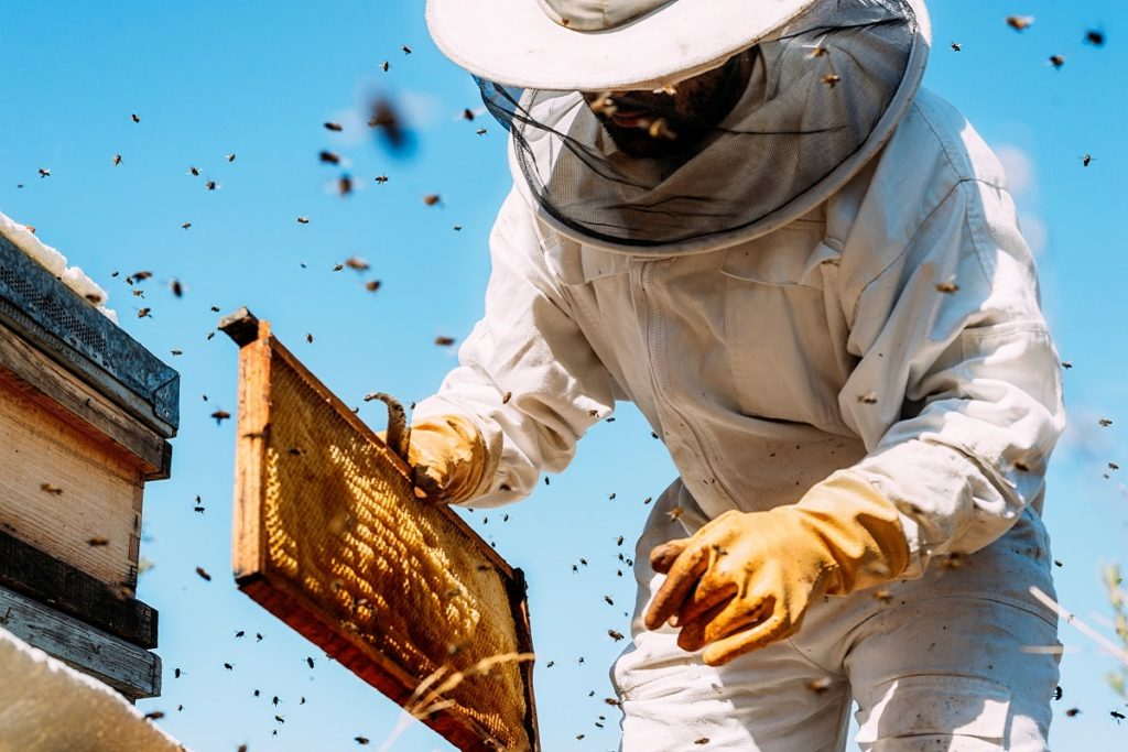 beekeeper in a protective suit