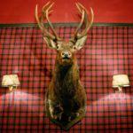 deer on the wall