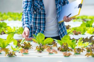 Top Agriculture Trends That Will Transform Farming Procedures
